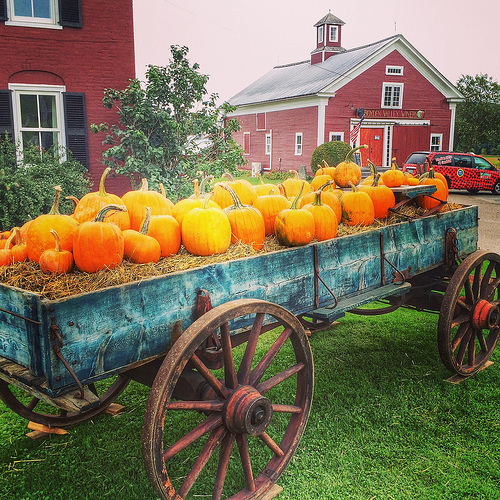 Pumpkins at Boyden Valley Winery & Spirits via Lizshealthytable.com