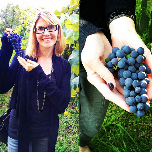 Picking Concord Grapes at Meadow Mist Farm with the Welch's RD via Lizshealthytable.com