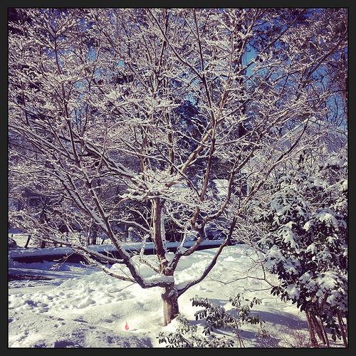 Snowy New England viz Lizshealthytable.com
